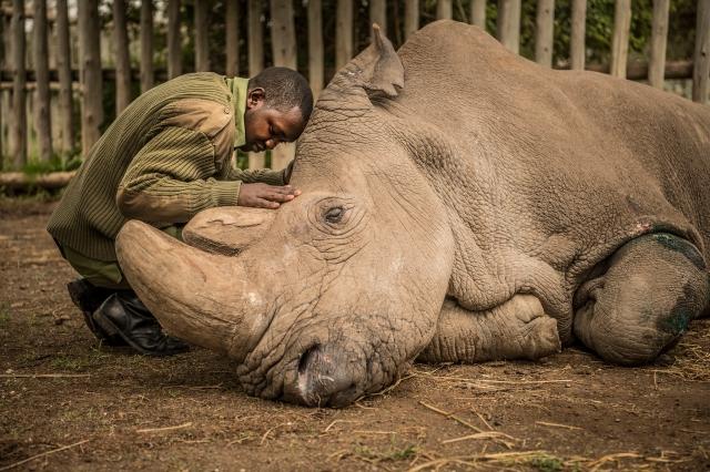 ami-vitale-last-male-northern-white-rhino-2