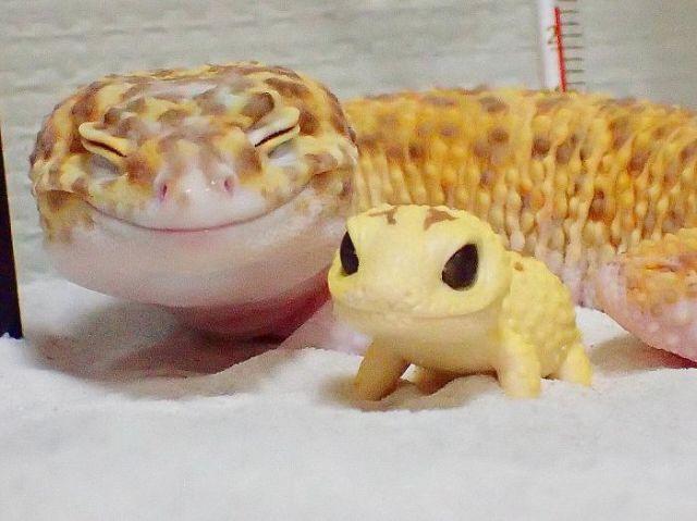 cute-happy-gecko-with-toy-kohaku-24-591e9c6e0b156__700
